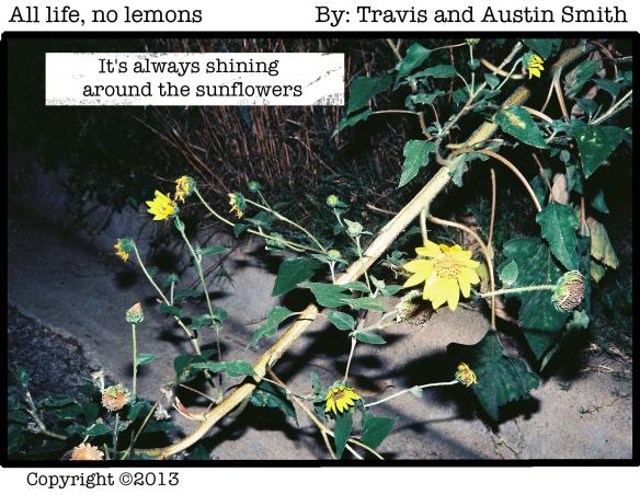 """sun""flowers"