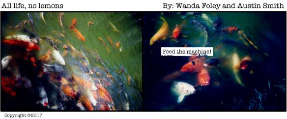 ANL Fish Feeders